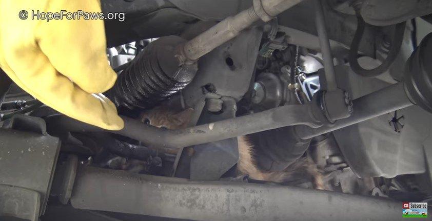 車に隠れる猫