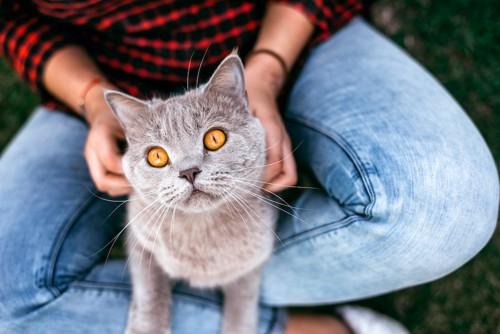 猫を膝の上に乗せて撫でる人