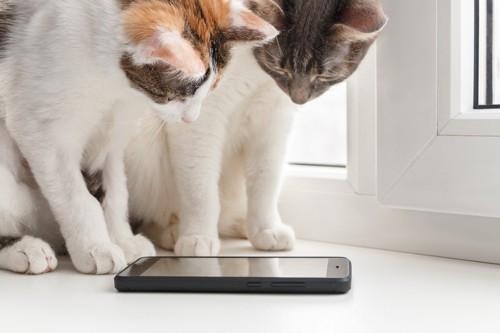 興味津々の猫たち