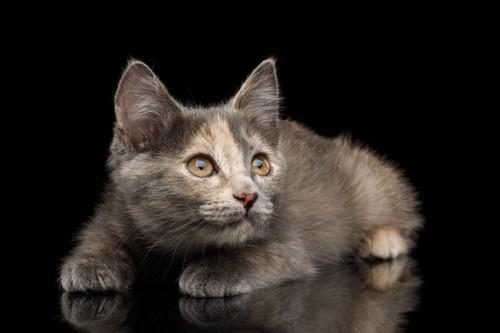 恐怖を感じている猫