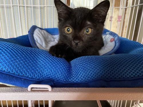 ケージの中で正面を見ている子猫