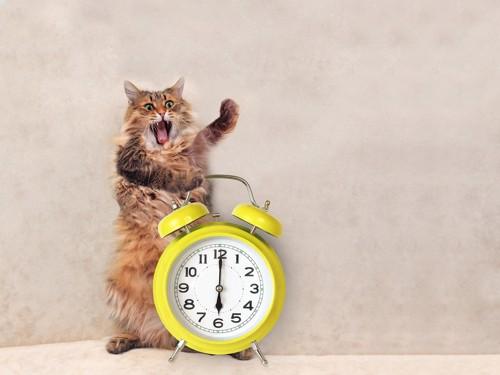 時計をもって騒ぐ猫
