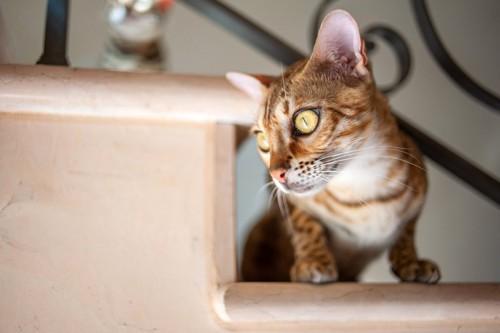 警戒中の猫