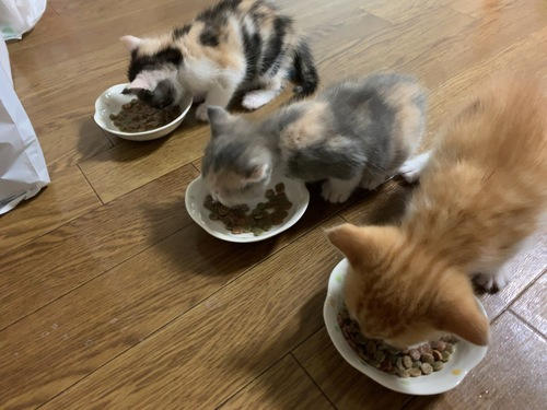 子猫のご飯