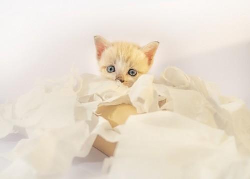 紙に包まれる猫