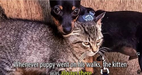 猫に頭を乗せる犬