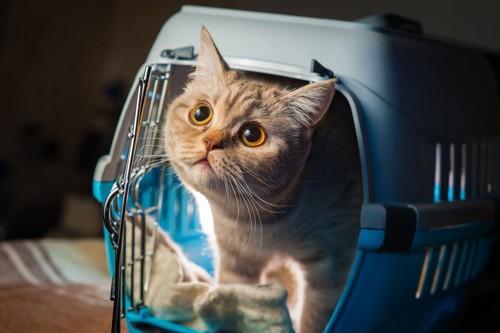 クレートから見つめる猫