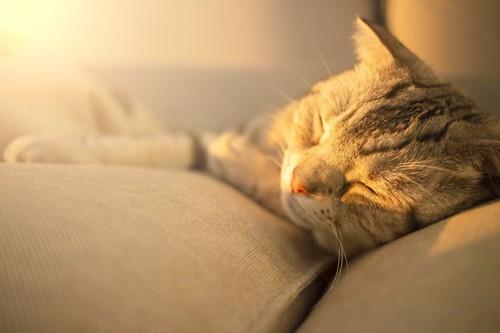 光を浴びて目を閉じている猫