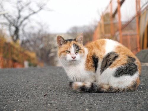 道端の三毛猫