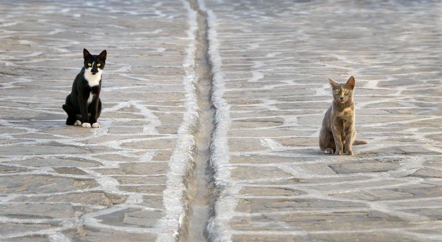 猫同士の境界線