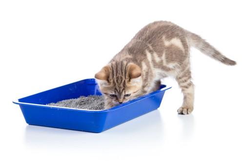 砂を掘る猫