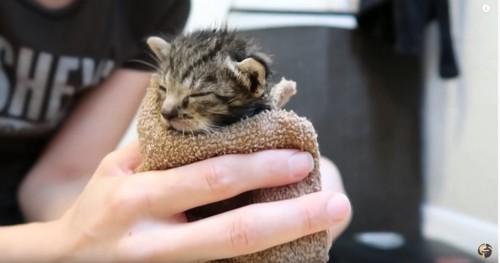 タオルに包まれる猫