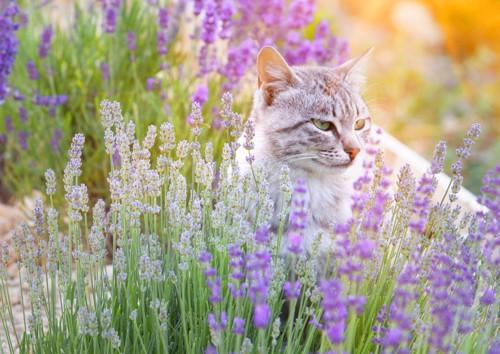 花畑にいる猫