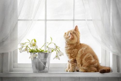 外を眺める子猫