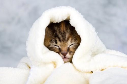 タオルにくるまって眠る子猫