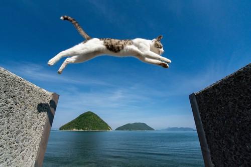 ジャンプして飛び移っている猫