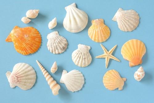 色とりどりの貝