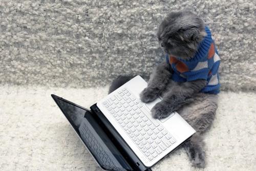パソコンで作業する猫