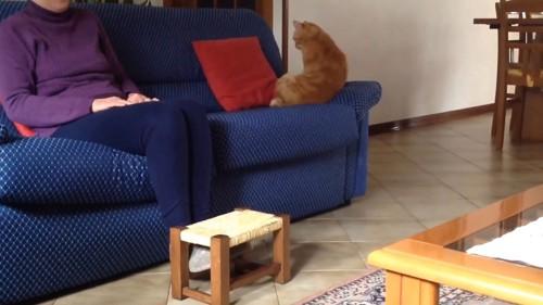 端で落ち着く猫