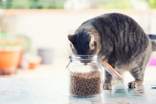 フードの入った瓶に頭を入れる猫