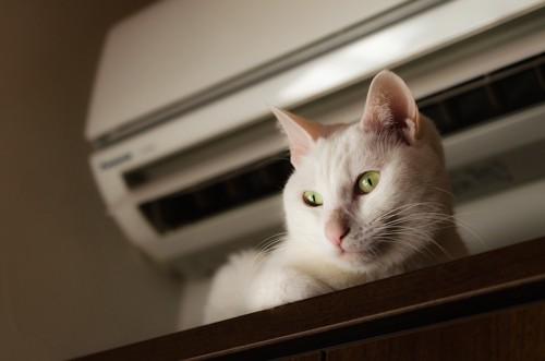エアコンのそばにいる白猫