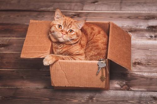 ダンボール箱に入っている猫