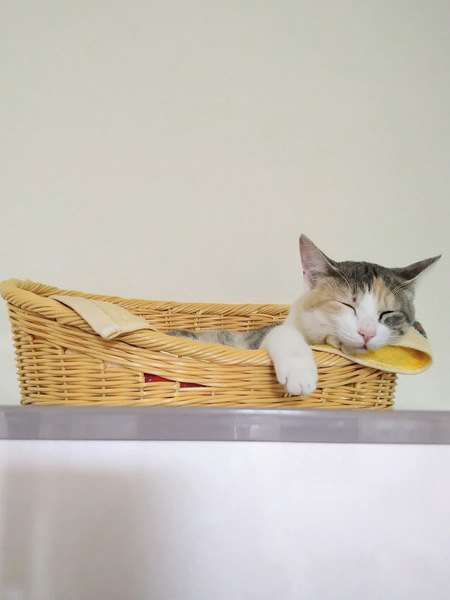 かごの中で眠る猫