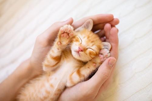人の手の中で仰向けに寝る子猫