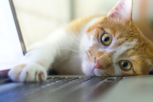 寝転んでパソコンのキーボードに手をのせる猫