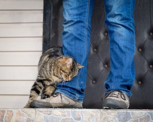 飼い主の足にスリスリする猫