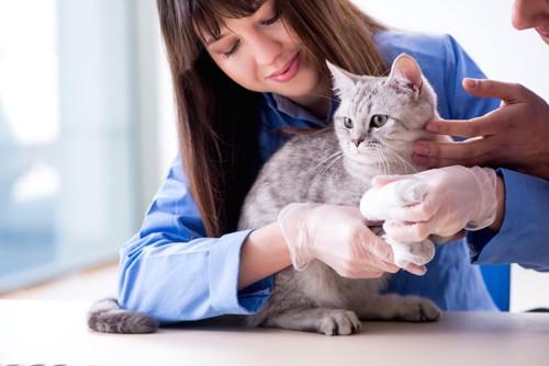 病院で手の治療を受ける猫
