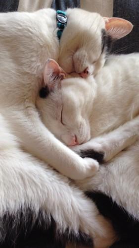 寝てる写真