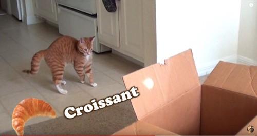 子猫とクロワッサンの絵