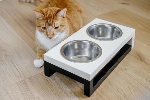空っぽのお皿の前にいる猫
