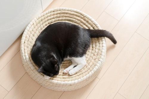涼しげな猫用ベッドの上で寝る猫