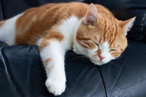 ぐったりと横になる猫