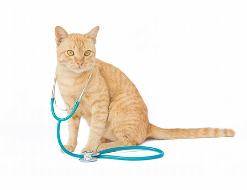 聴診器をかけた猫