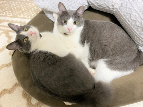 カメラを見上げる2匹の猫