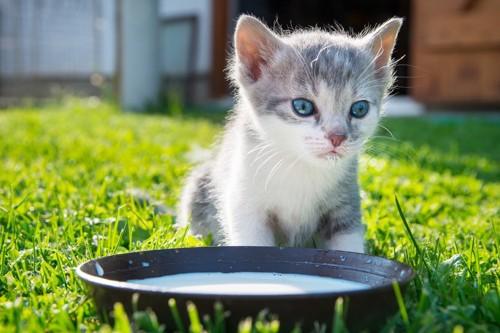 子猫とミルク