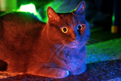 紫外線と猫