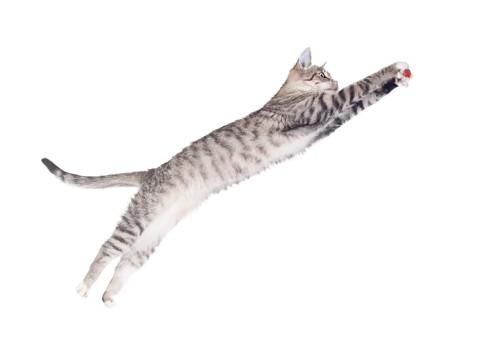 空中で何かを掴む猫