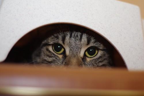 狭いところに隠れて様子を伺う猫