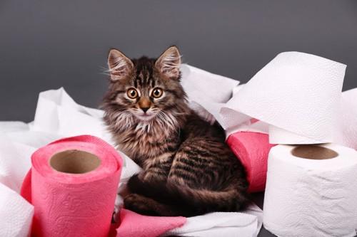 紙に囲まれる猫