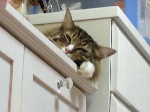 棚で寝る猫