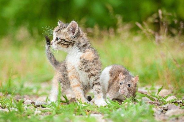 外で一緒にいる子猫とネズミ