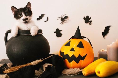 猫のハロウィンパーティ