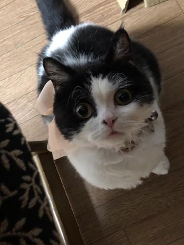 見上げるまんまるな猫