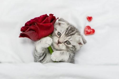 赤いバラを持った子猫