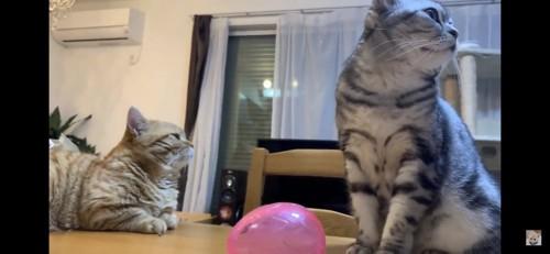 そっぽを向く猫二匹