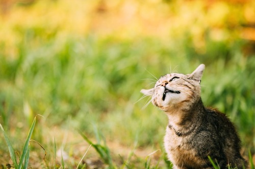 頭を振っている猫